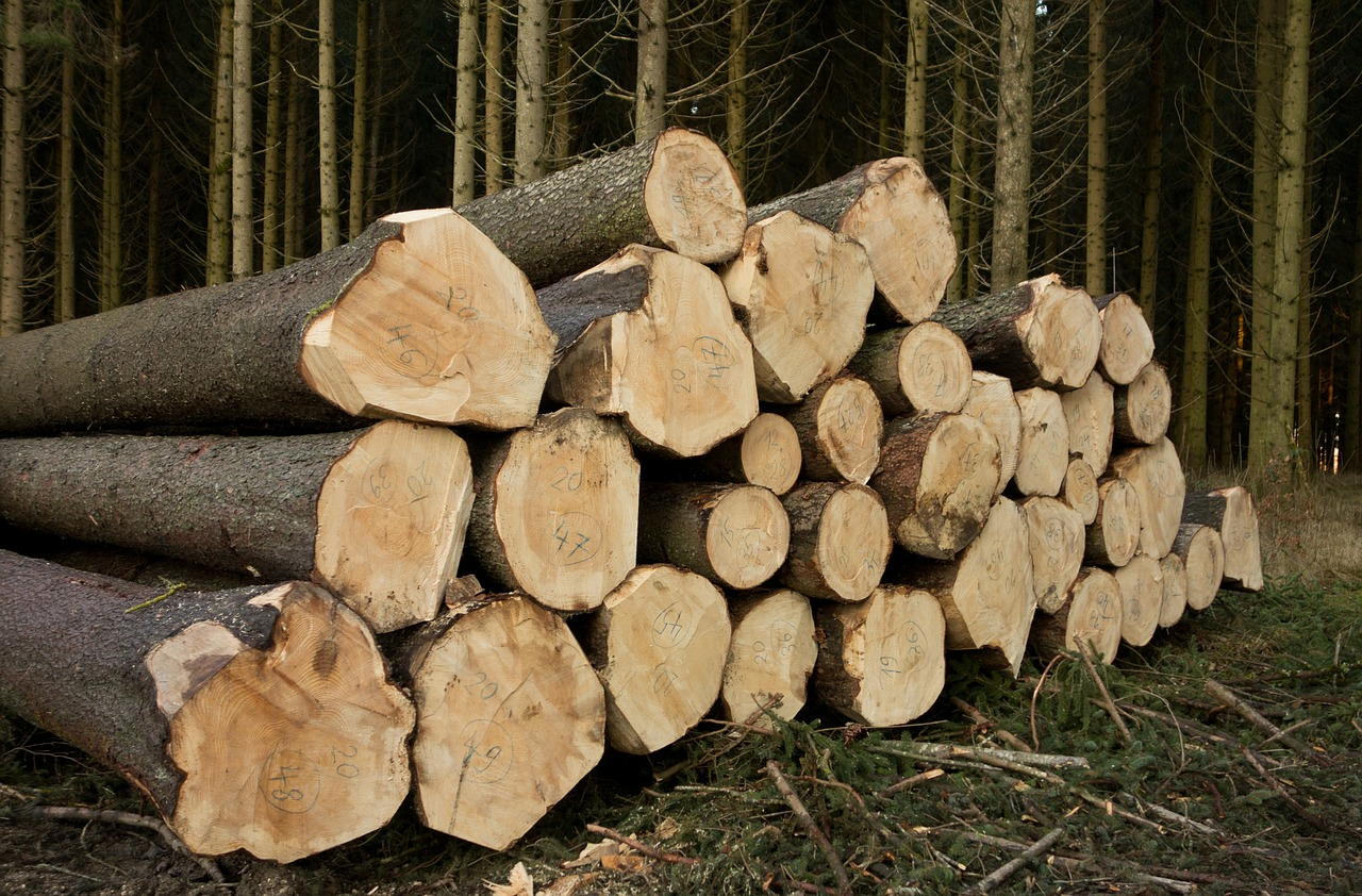 wood, holzstapel, forest workers